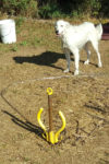 Pristine-pet-anchor-animal-dog-tie-out-insure-safety-portable-ground-anchoring-device